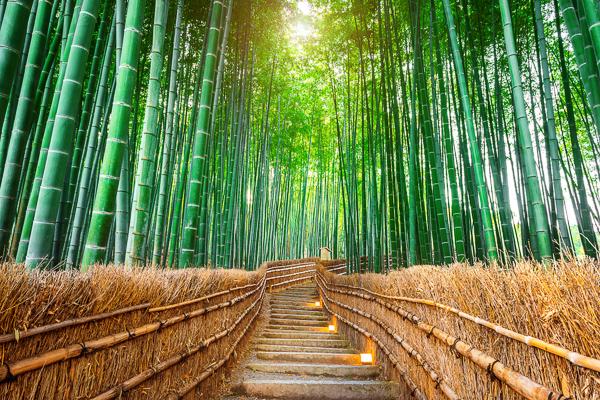 Bambus: neobyčajná tráva s úžasnými vlastnosťami